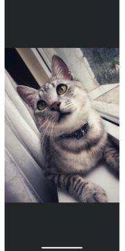 Junge Katze sucht ein Zuhause
