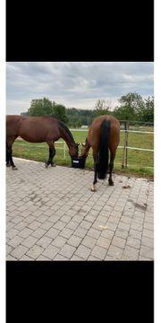 Pferdebox frei mit täglichem Weidegang