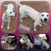 Wunderschöne Hündin Dora 1 Jahr