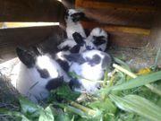 Kaninchen suchen einen schönes neues
