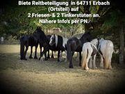 Biete Reitbeteiligung an 4 Pferden