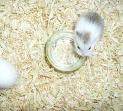 2 kleine Näpfe für Wasser