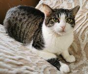 Freundliche Katze Minou sucht Dich