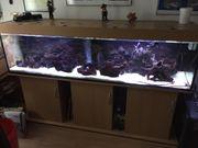 2 Meter langes Aquarium mit
