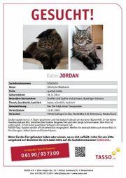 Kater Entlaufen Vermisst Katze gesucht