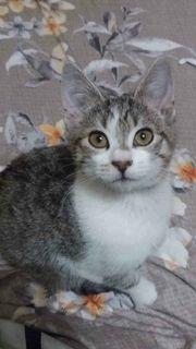 Muneca Katze aus dem Tierschutz