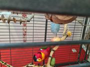 Sprechender papagei