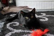 Pretinha - kleines Schwarzes mit Kulleraugen