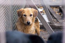 Hunde - Loulou - Wartet auf ihren Icebreaker