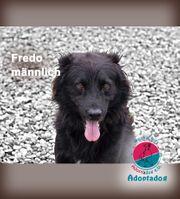 Fredo - Gute-Laune-Hund für Gute-Laune-Menschen