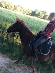 Tolles hübsches Geländepferd