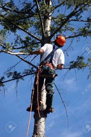 Baumfällungen Risikobaumfällungen