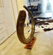 Mammutstoßzahn Mammoth Tusk Mammut Fossilien