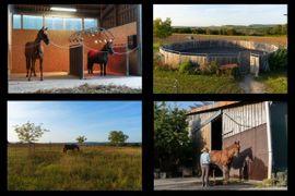 Laufstall frei: Kleinanzeigen aus Erdmannhausen Bugmühle - Rubrik Pferdeboxen, Stellplätze