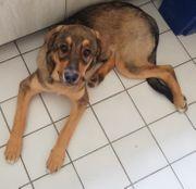 Junghund knapp 5 Monate
