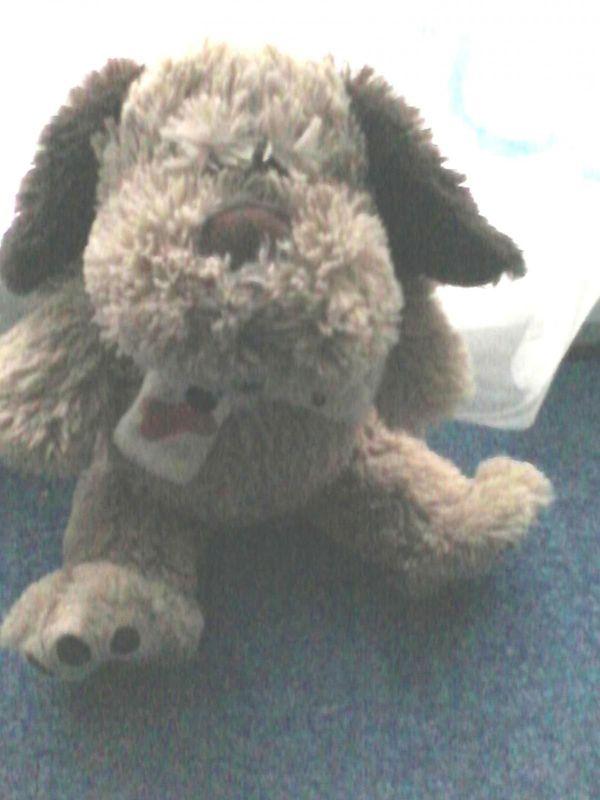 Spielzeug - Plüschtier - Plüsch - Hund - flauschig - sitzend
