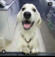Tierschutzhund Picachu ca 6 Monate