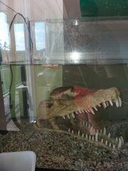 Wasserschildkröte sucht neues Zuhause Claudius