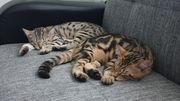 2 jungkatzen