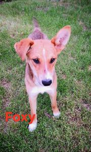 Foxy sucht ein Zuhause
