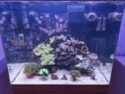Meerwasseraquarium 130 Liter Komplett zu