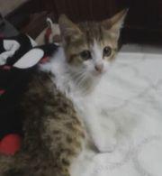 Babykatze braucht Hilfe und sucht