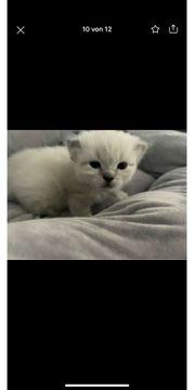 Süße Kitten suchen nach Personal