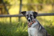 JOY - wunderschönes Hundemädchen sucht NEUES