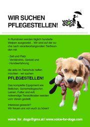 Pflegeplätze für Hunde gesucht
