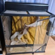 Exo Terra Glas Terrarium 60x45x60cm
