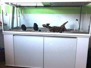 Schildkröten-Aquarium Spezialanfertigung