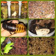 Futtertiere Bodenpolizei Asseln Schaben Würmer