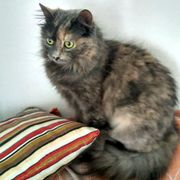 Katzendame Lilou sucht ihre liebevollen