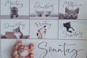 Katzensitting Katzenhotel Katzenbetreuung