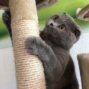 Mobile Katzenbetreuung im Fünfseenland