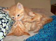 2 wunderschöne Mischlinge Katzenbabys