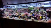 Korallen Salz Meerwasser Weich und
