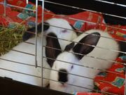 2 junge Kaninchen m 14