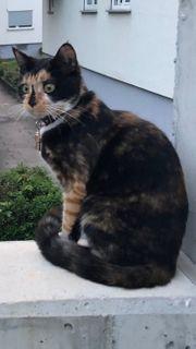 geliebte Katze vermisst