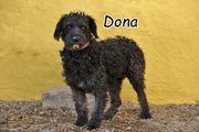 Dona sucht Lebensplatz mit Artgenossen