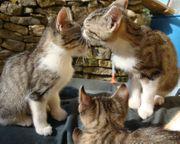 Verschmuste Baby Katzen Katzenbabys Rassemix