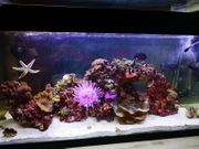 Rundum Komplettpaket Meerwasser Aquarium