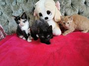 3 süße Hauskatzen suchen ein