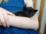 zuckersüße Babykatzen