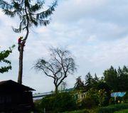 Baumpflege Seilklettertechnik Baumfällung Forst Hecken