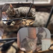 Katze Bounty 4 Monate geimpft