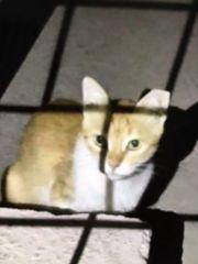 Katze Rossi sucht ein liebevolles