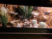 Terrarium mit besatz und deko