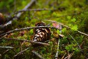 Suche Waldstück 1-2ha