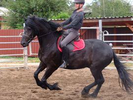 Pferde - Ständig schöne Fahr-u Freizeitpferde